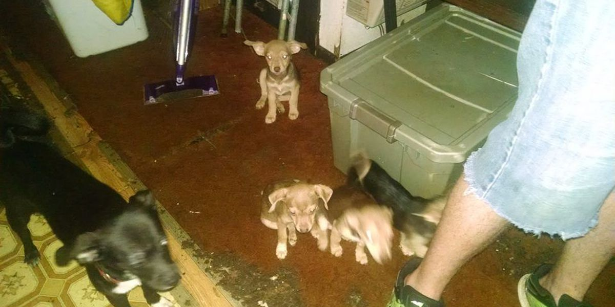 Animal rescuers find 30 dogs hoarded in Black Rock home