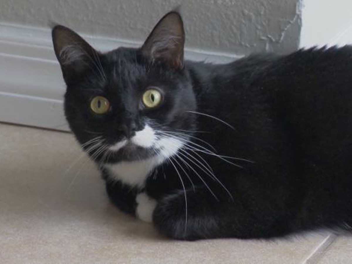Cat saves couple from carbon monoxide poisoning