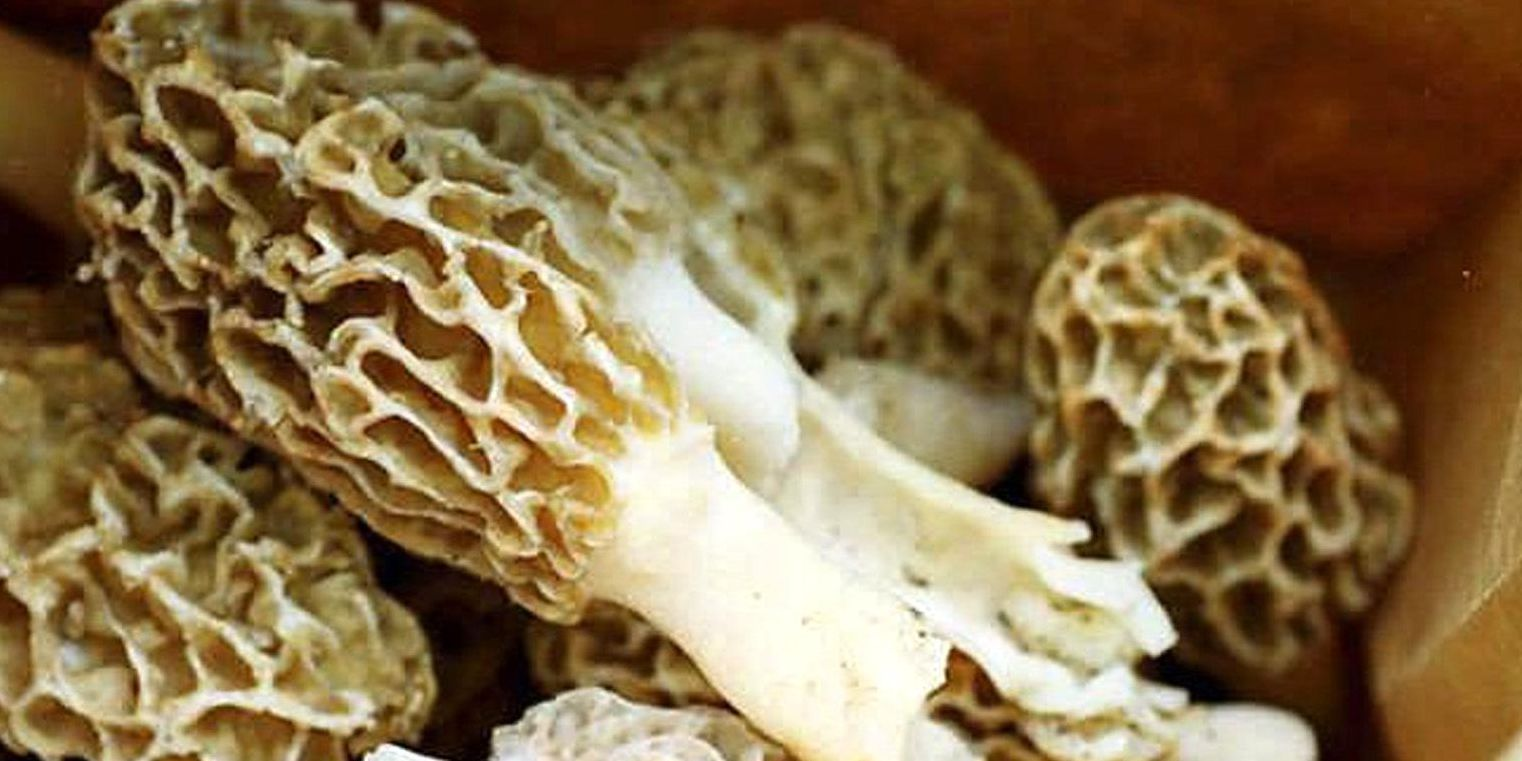 Mushrooms may have killed woman who ate at restaurant in Spain