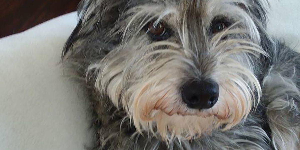 Dog found safe and sound