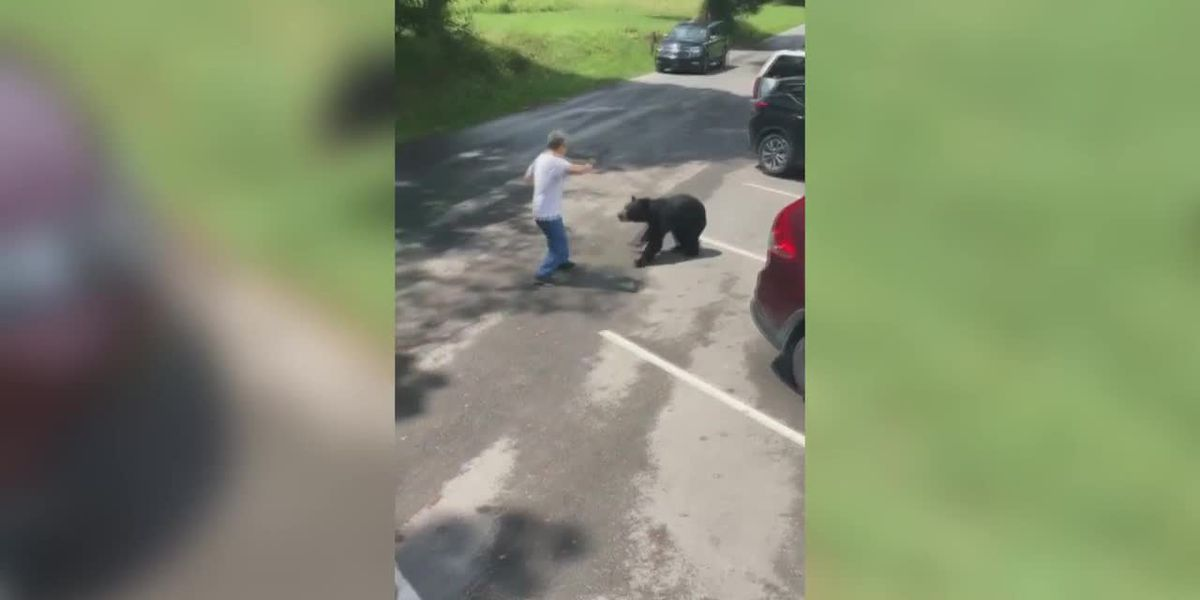 WATCH: Man gets between mother bear and cubs in Tenn. park