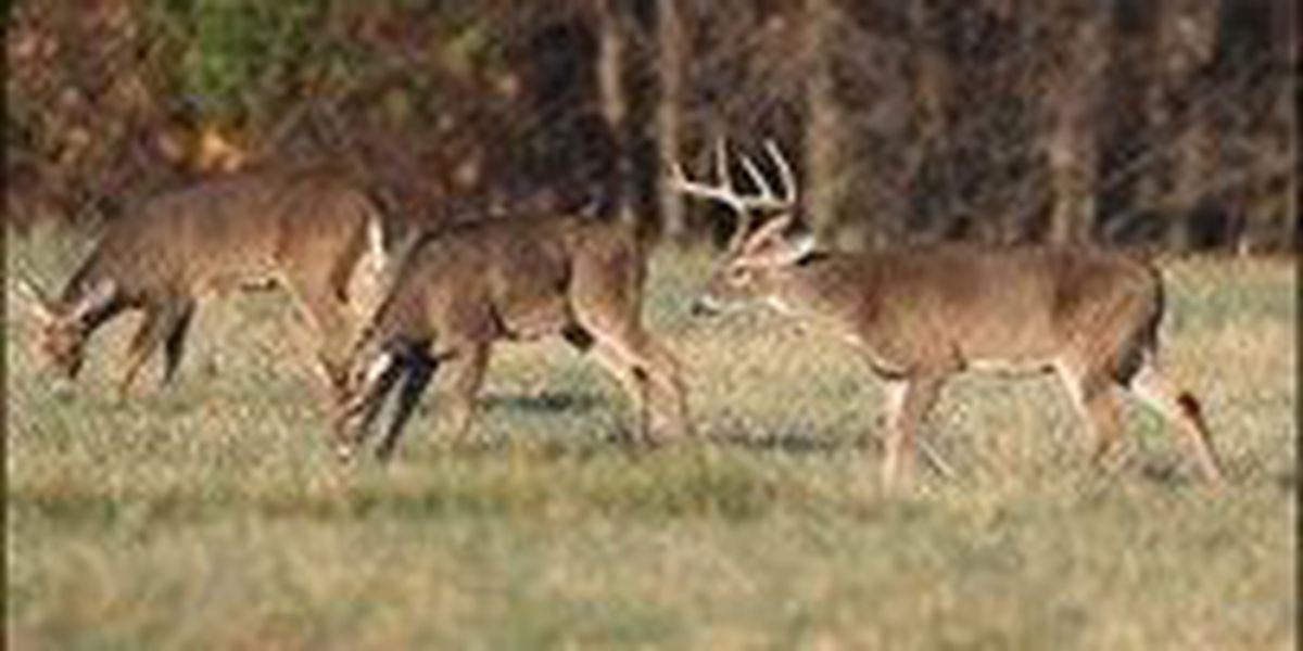 Comment on 2016-17 Hunting Regulations