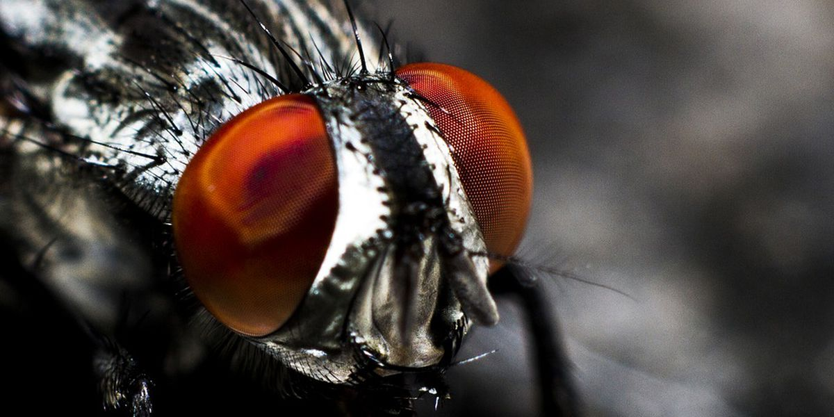 Wet weather brings out bugs, tips on how to stop them
