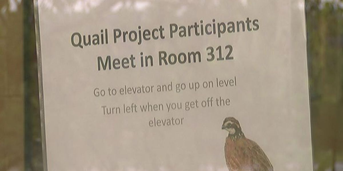 Arkansas teachers learn how to integrate quail into the classroom