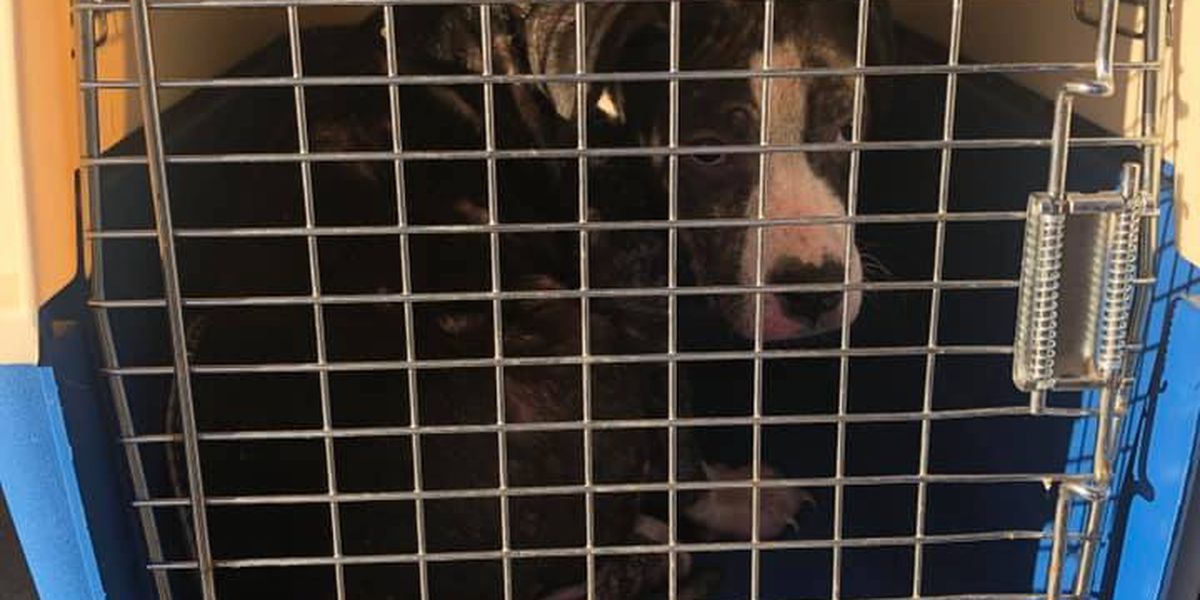 Deputies, NEAHS rescue dog, ask for donations for medical treatment