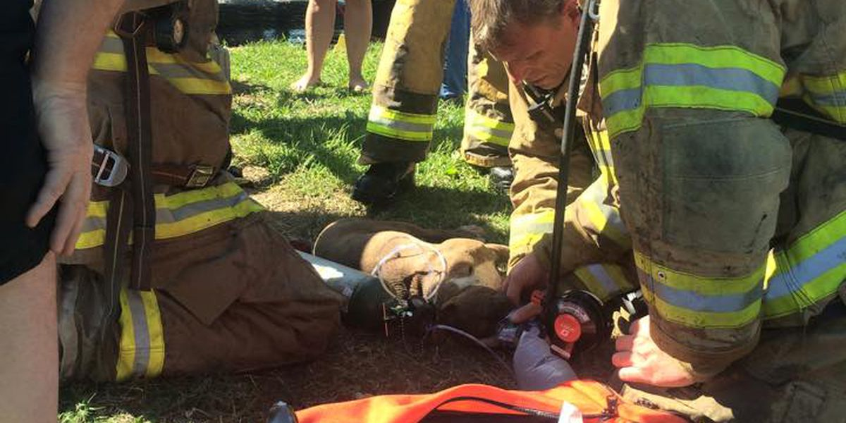 Emergency responders save dog in Batesville house fire
