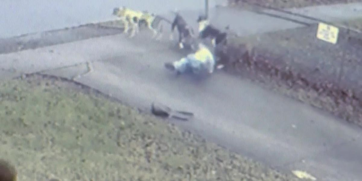 GRAPHIC Video: Pack of dogs knock down, attack woman