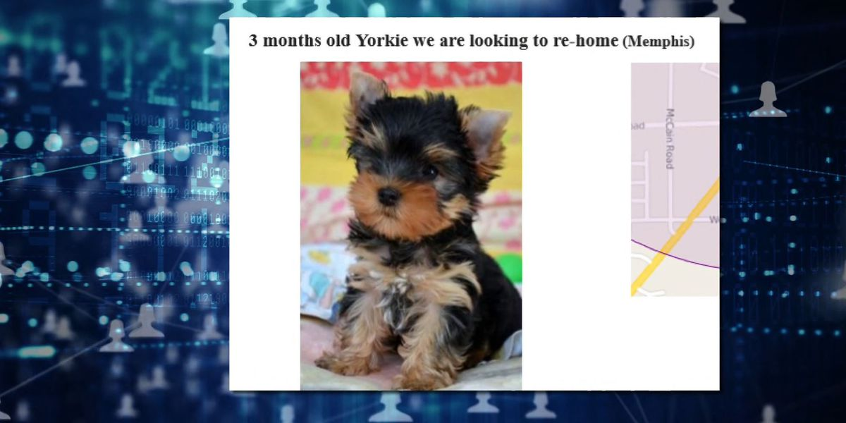 The Investigators: Mid-Southerners losing thousands buying products on fake websites, purchasing puppies that never arrive