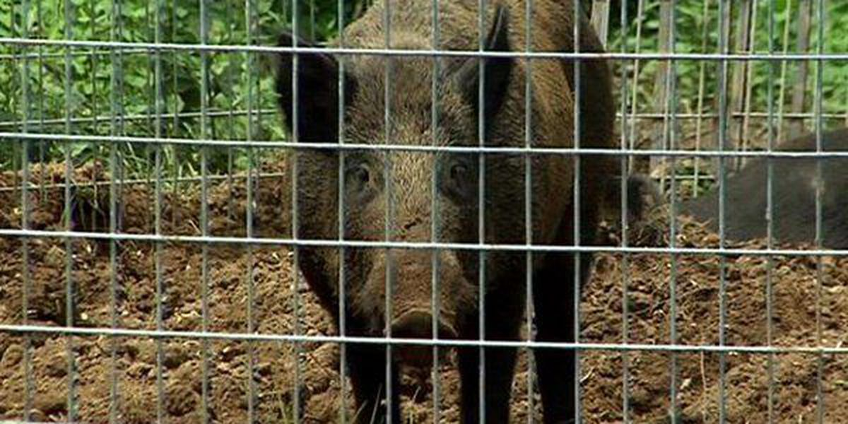 State gives notice on hog farm permit near Buffalo River