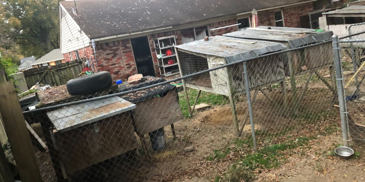 Memphis man faces cruelty charges after MAS rescues 35 dogs from backyard