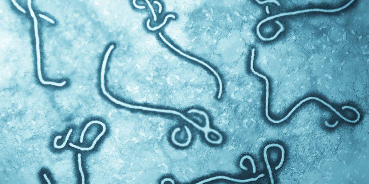 Ebola outbreak in Congo declared a global health emergency