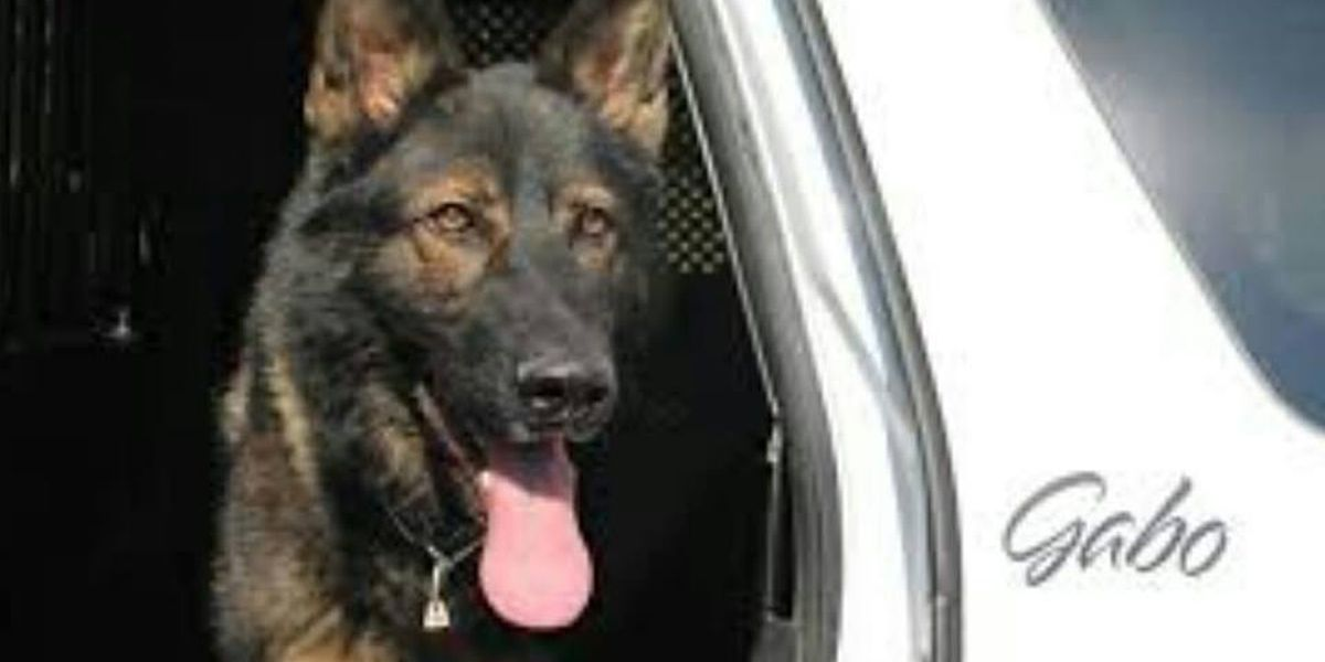 K9 officer's story sparks support from across the country