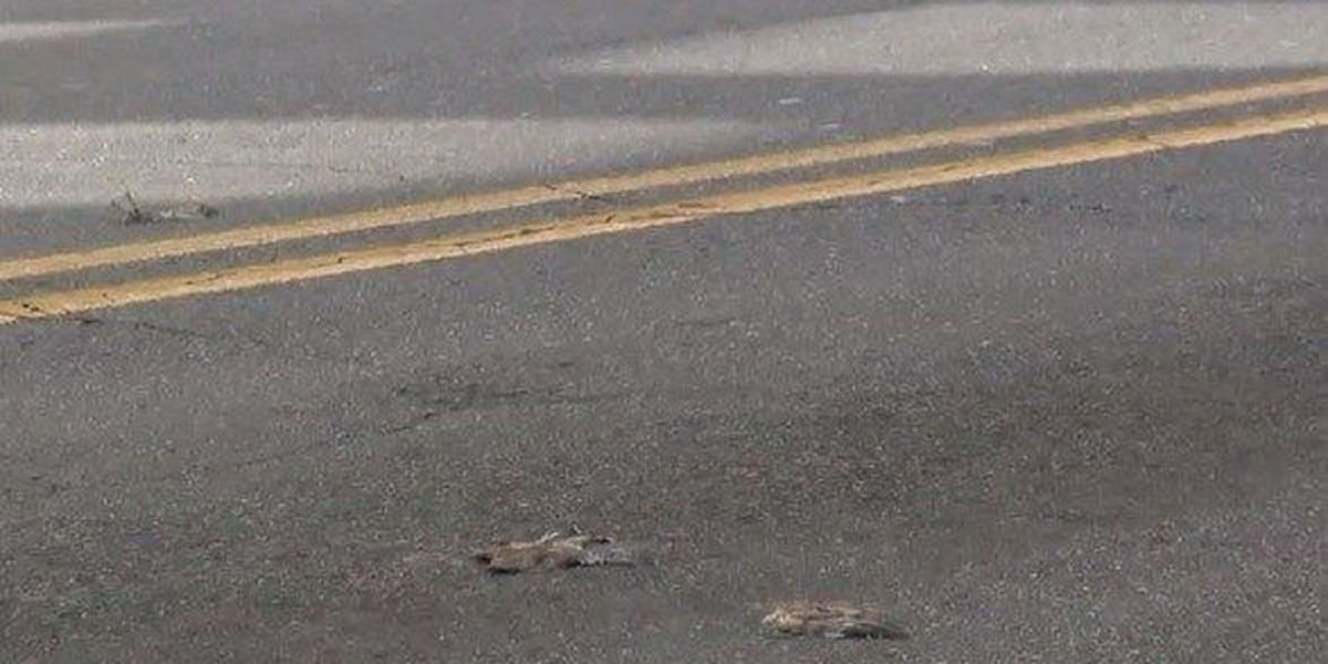 Birds found dead after drinking alcoholic berries in Little Rock