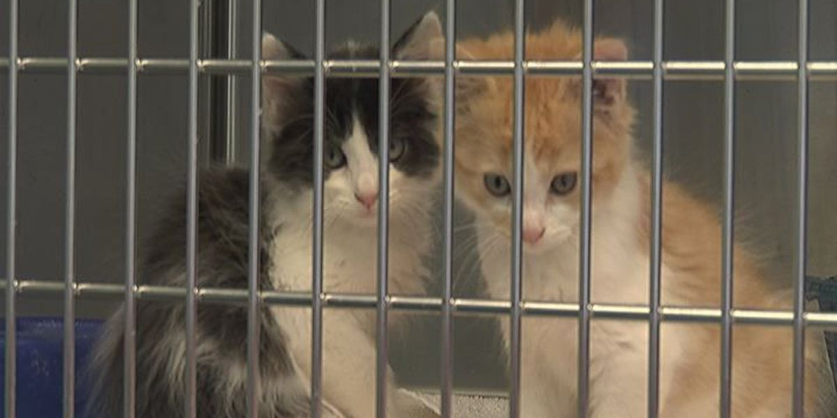 Website outage hampers business at NEA Humane Society