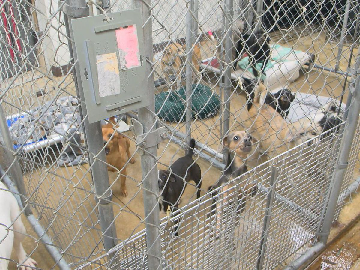 COVID-19 takes toll on Kennett Humane Department