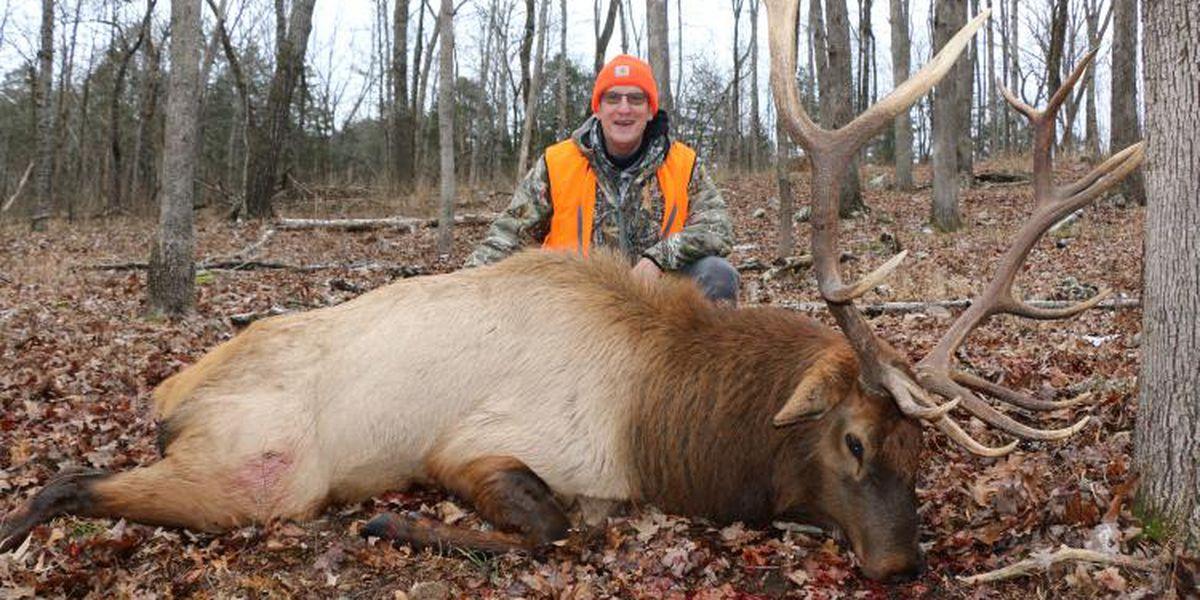 All 5 selected hunters bag elk during firearm portion of Missouri's first elk hunt