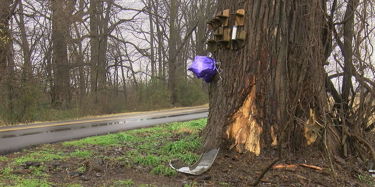 Community members fight to cut down tree in infamous crash spot