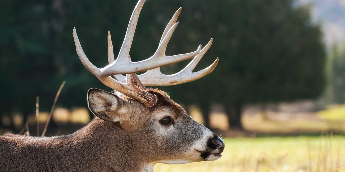 More than 170K deer harvested in Mo. in Nov. firearms season