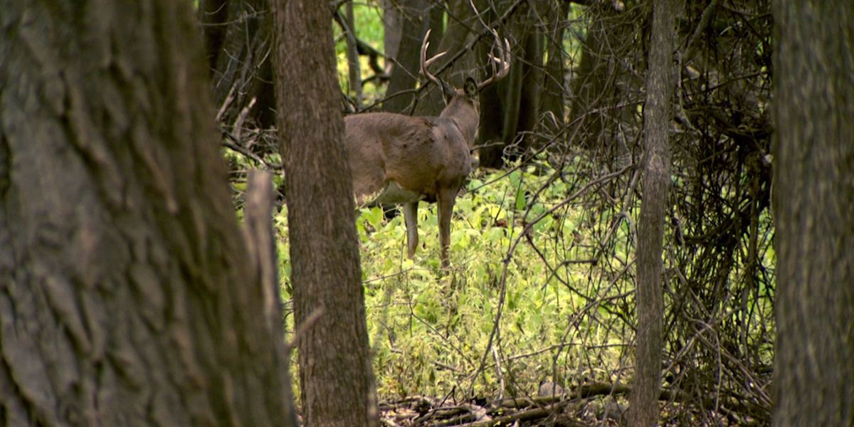 148 deer in Tennessee test positive for deadly disease