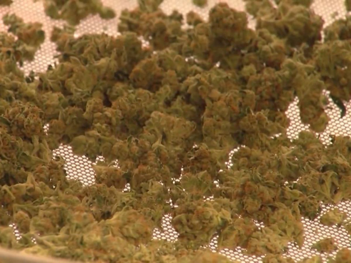 Legislators discuss using medical marijuana in place of opioids for treatment