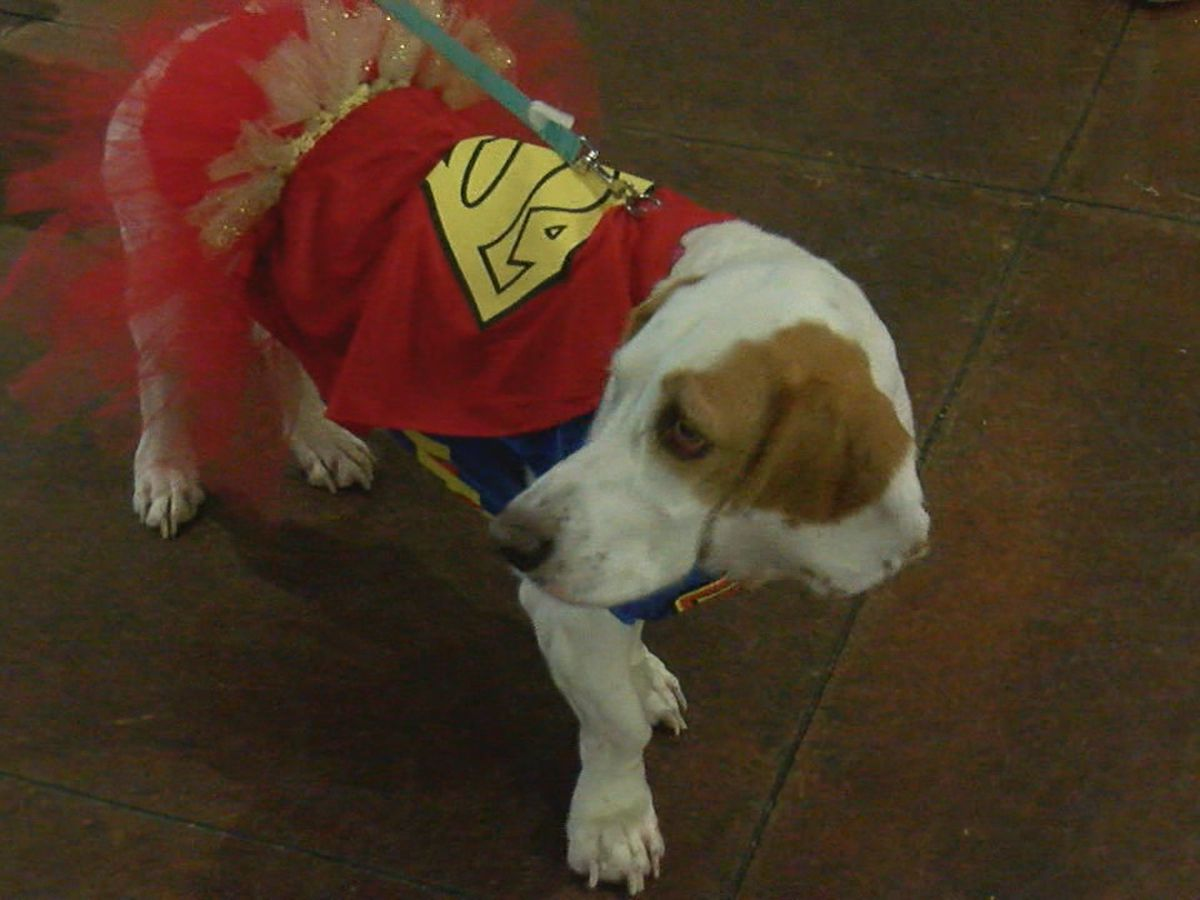 Dogs put on a show to help community