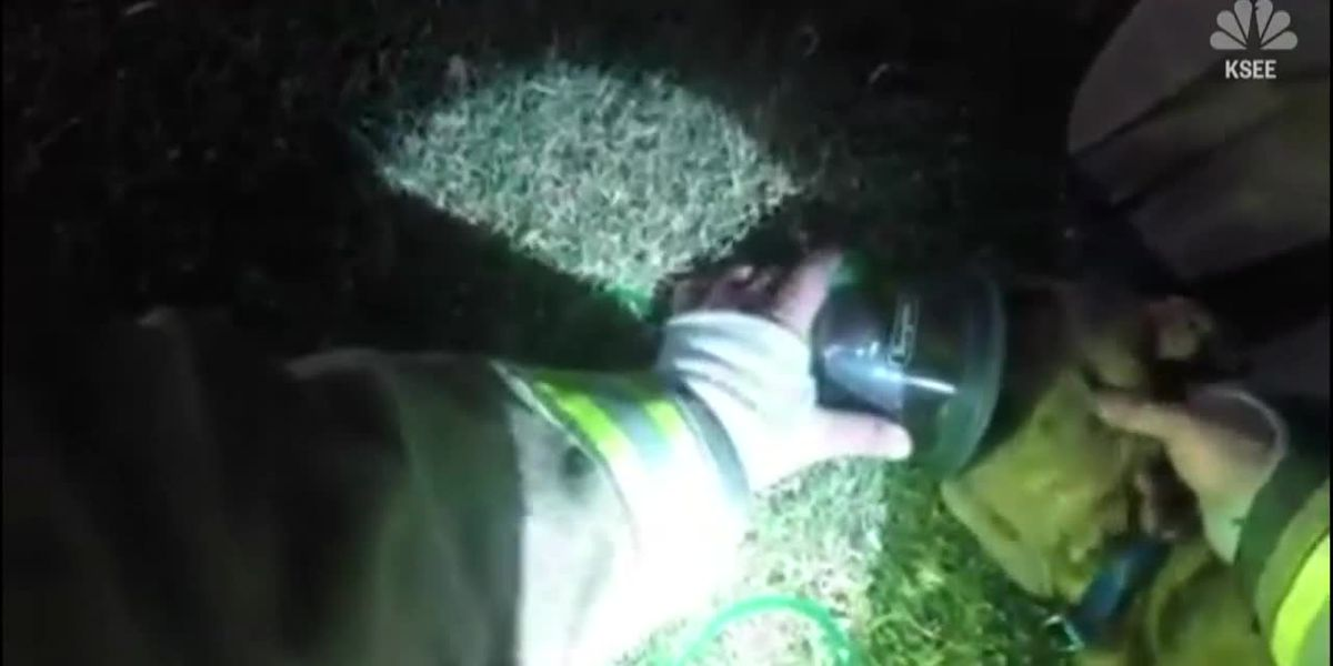 Firefighters save unconscious dog with special equipment