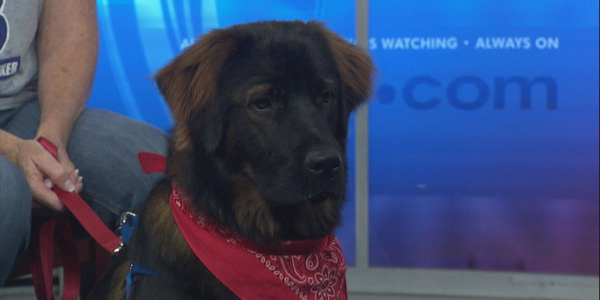 NEA Homes for Dogs slated for Saturday