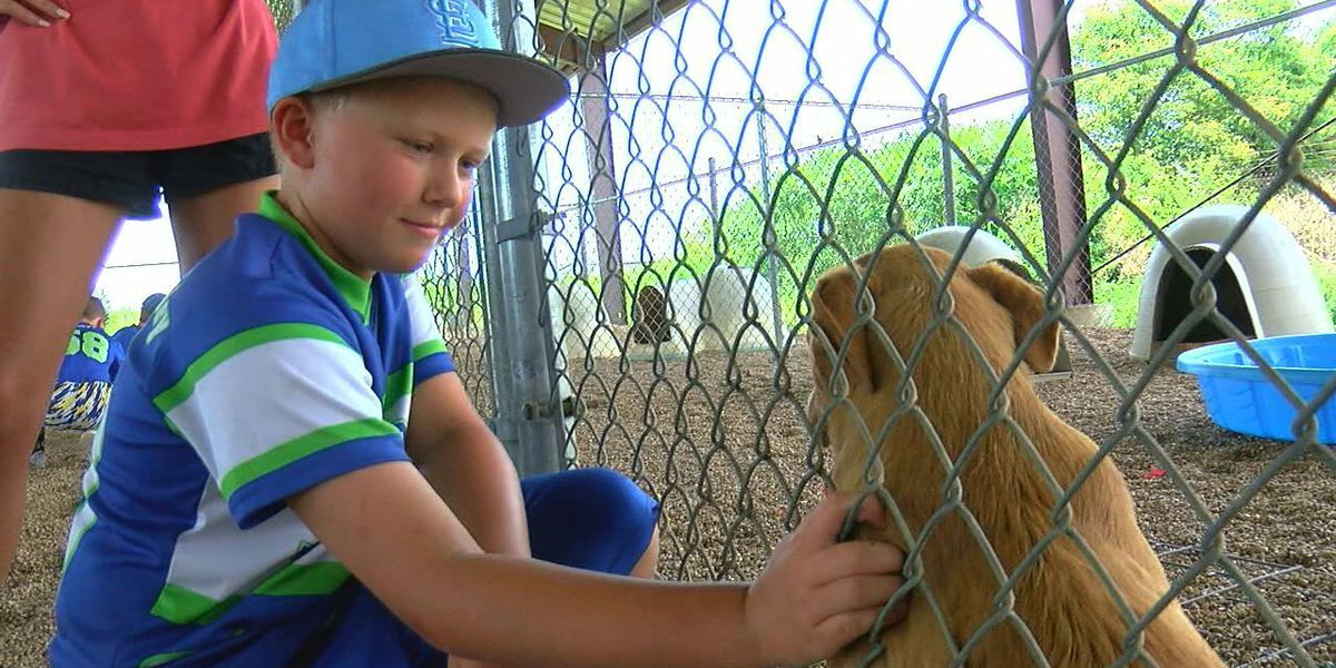 Children help to lend hand for animals