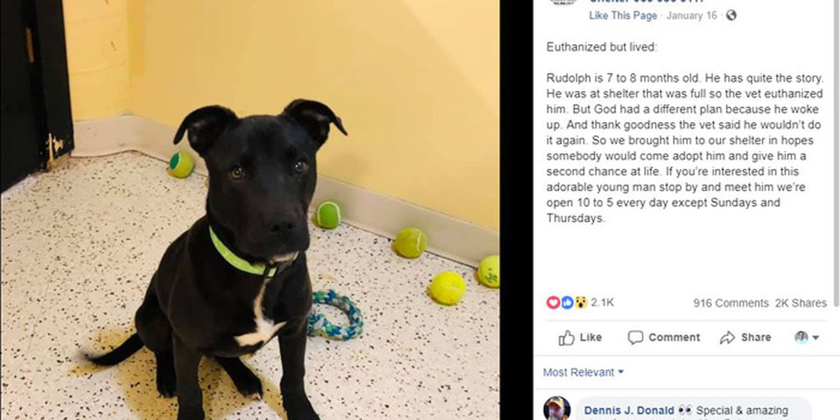 Dog survives euthanasia attempt, gets new home