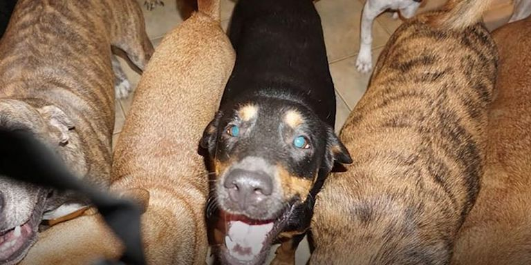 During Hurricane Dorian, a woman sheltered nearly 100 dogs in her Bahamas home