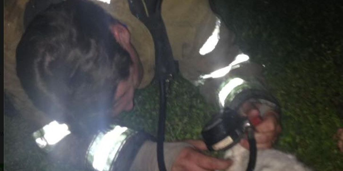 GR8 Job: Paragould firefighters go 'above and beyond' to save family's furbaby
