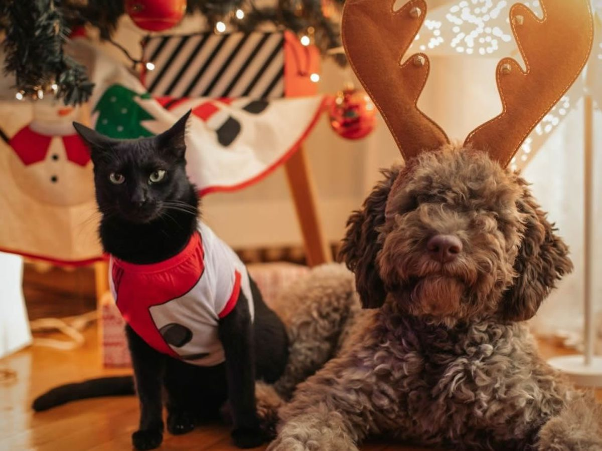 Share yours: Pets dress up for Christmas and the New Year