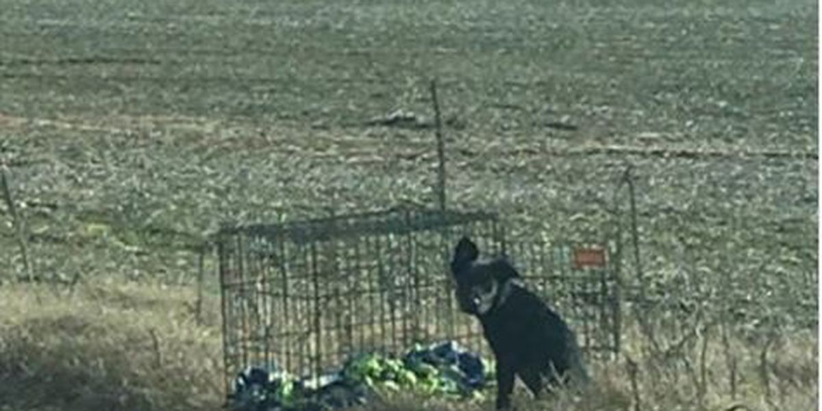 Authorities find abandoned dog on the side road in Dunklin Co.