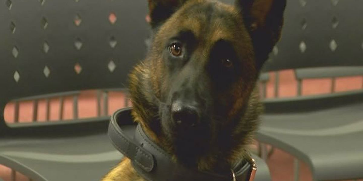 New safety protection for four-legged officer