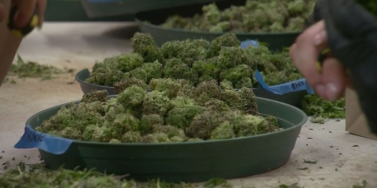 Arkansas group will file ballot petitions for recreational marijuana