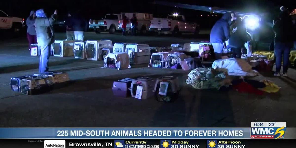 225 Mid_South animals pets head to find their forever homes