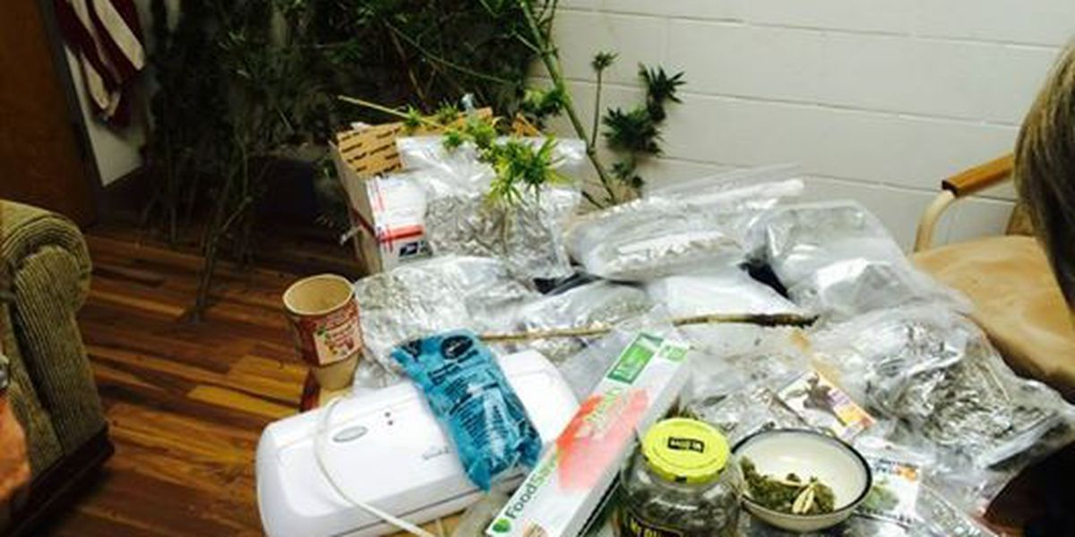 Tip leads sheriff's office to drugs, one arrest made