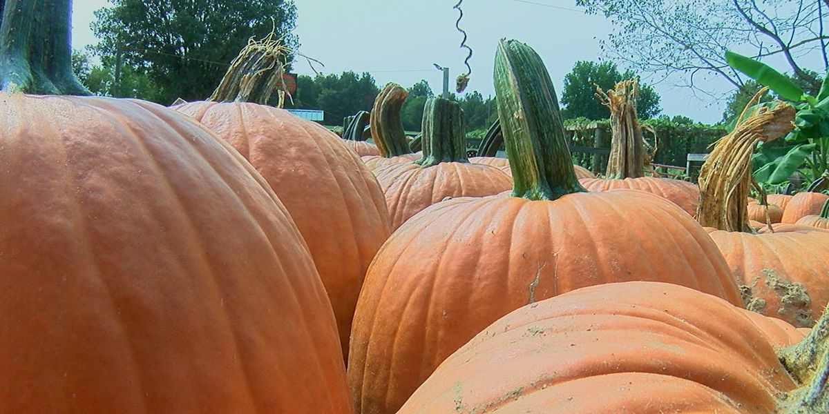Not just Halloween masks will be worn at Pumpkin Hollow