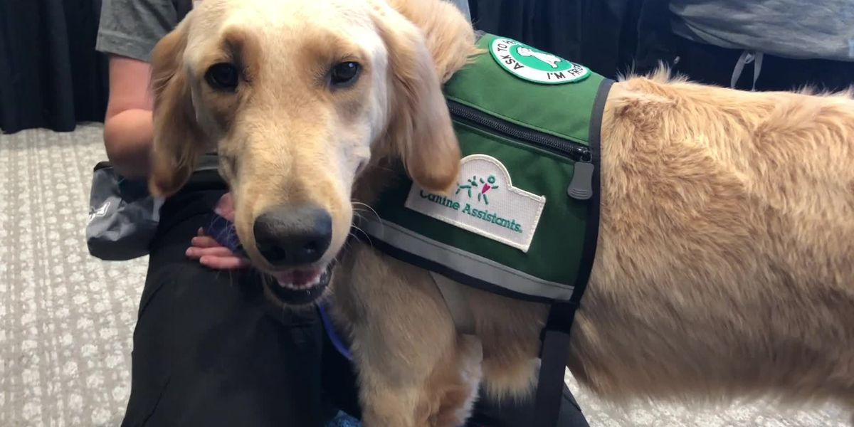 New service dog program Introduced at St. Jude