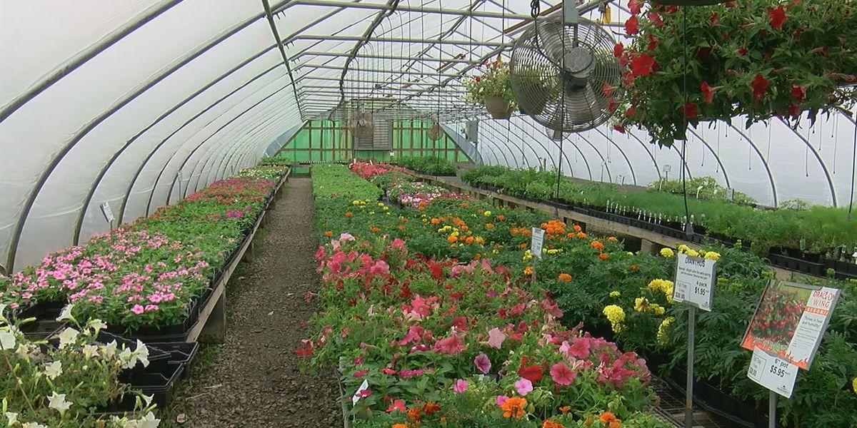 Increase in growing gardens during pandemic