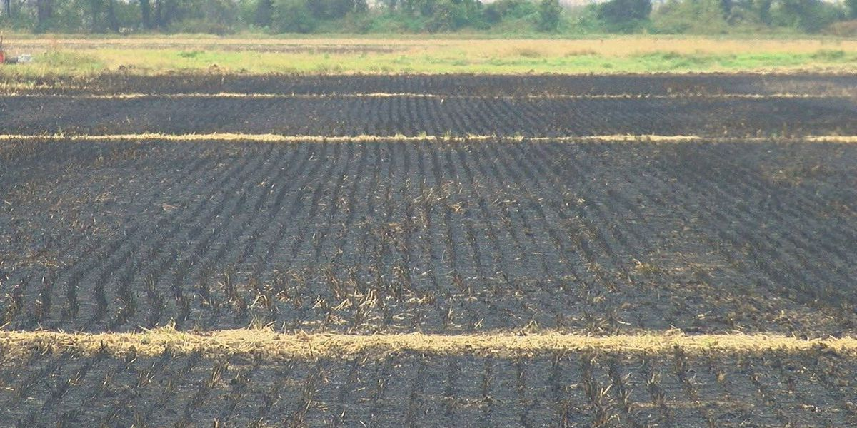 Farmers vote to set up crop burning task force