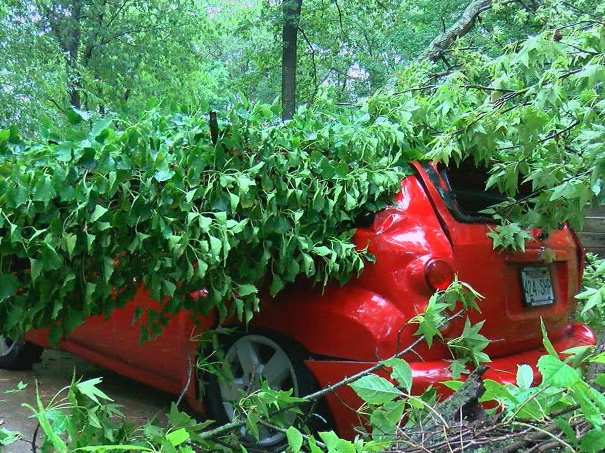 High winds knocks tree onto Jonesboro man's car