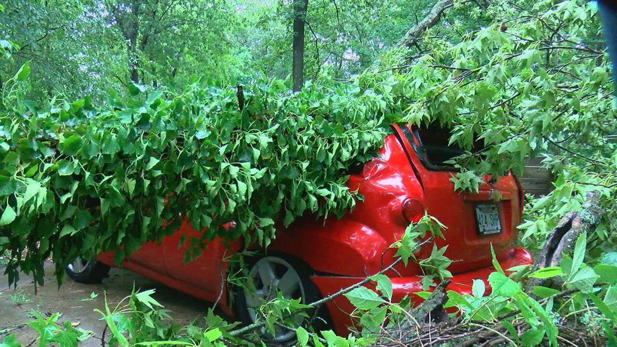 High winds knock tree onto Jonesboro man's car