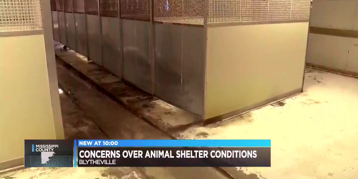Blytheville animal shelter concerns