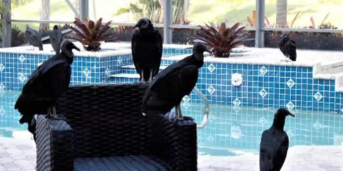 Fla. neighborhood infested with vultures