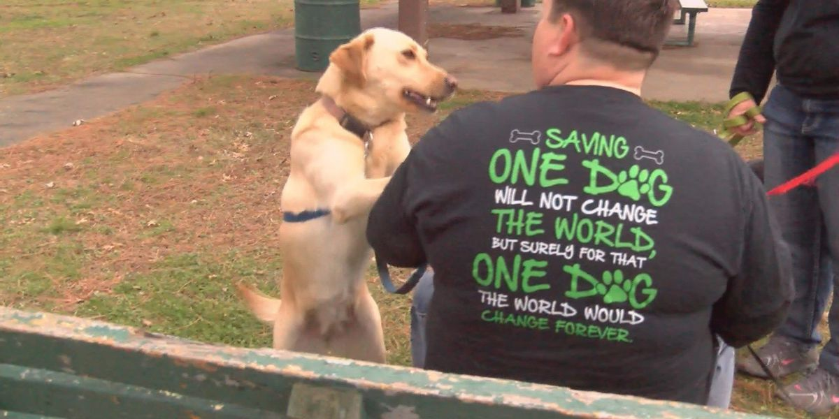 Local animal rescue group in urgent need of donations