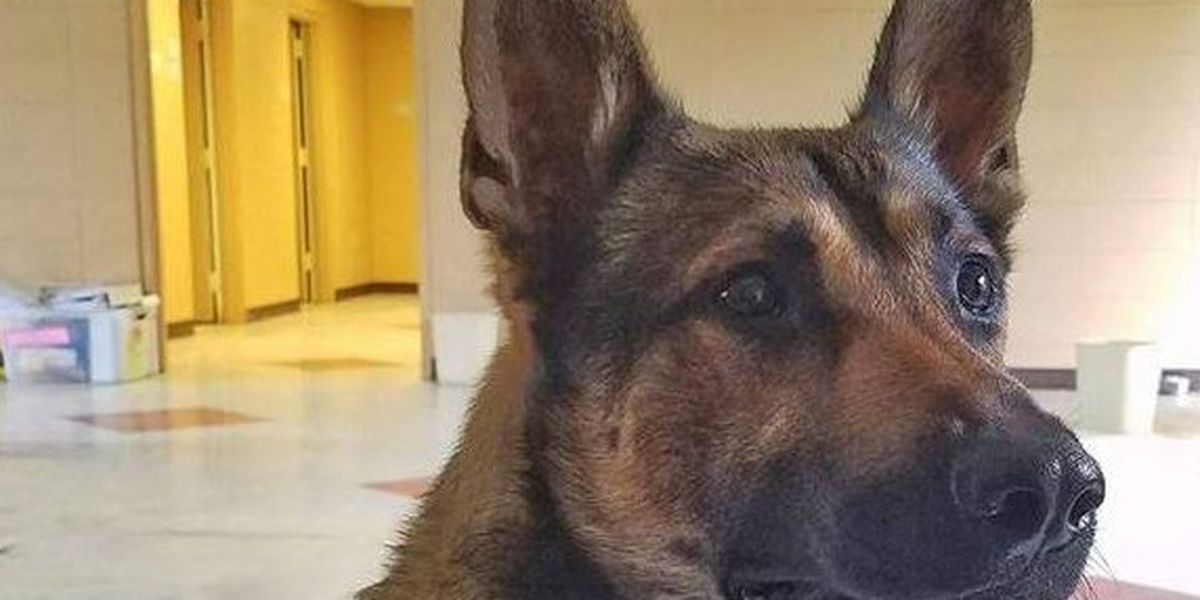 Anonymous donor takes vested interest in K9 officer