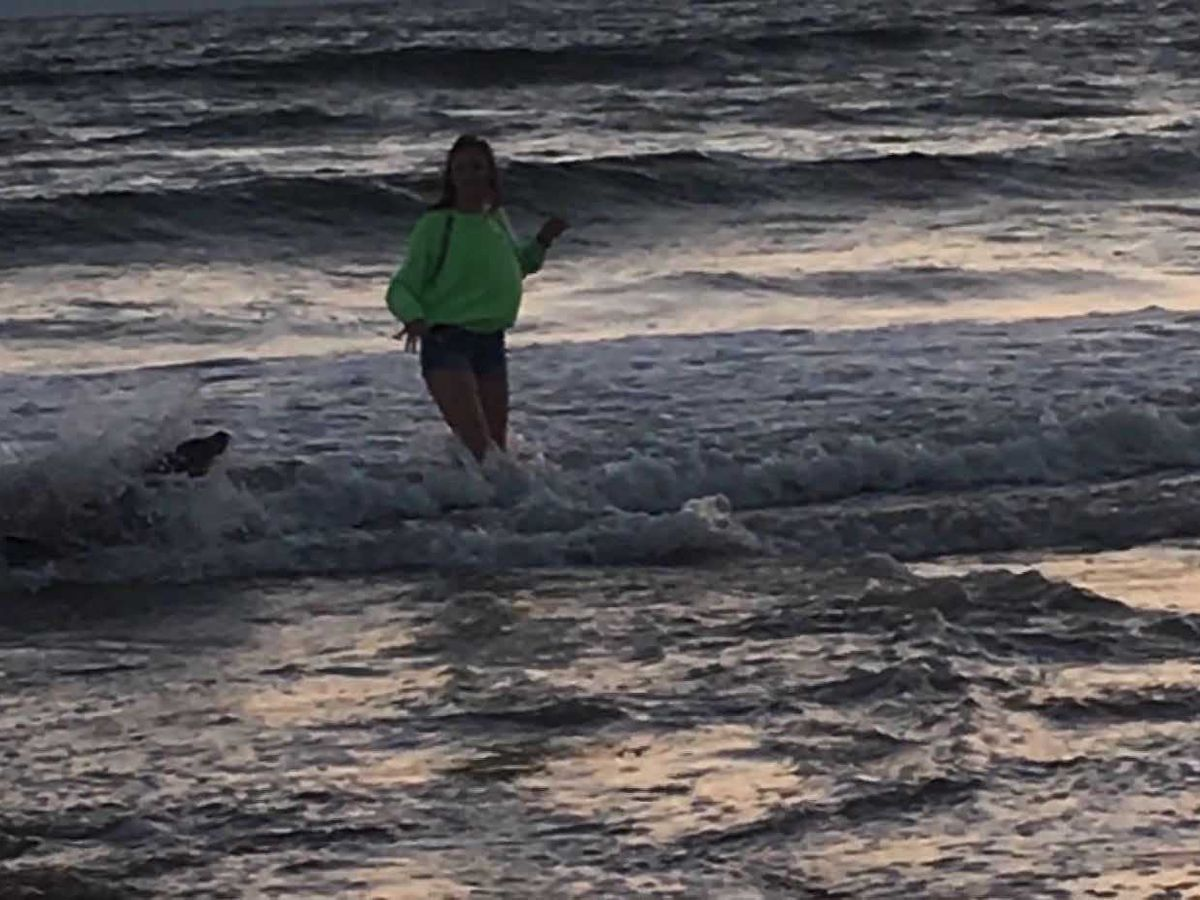 Sea lion attacks 13-year-old girl on California beach; Neurotoxin may be to blame