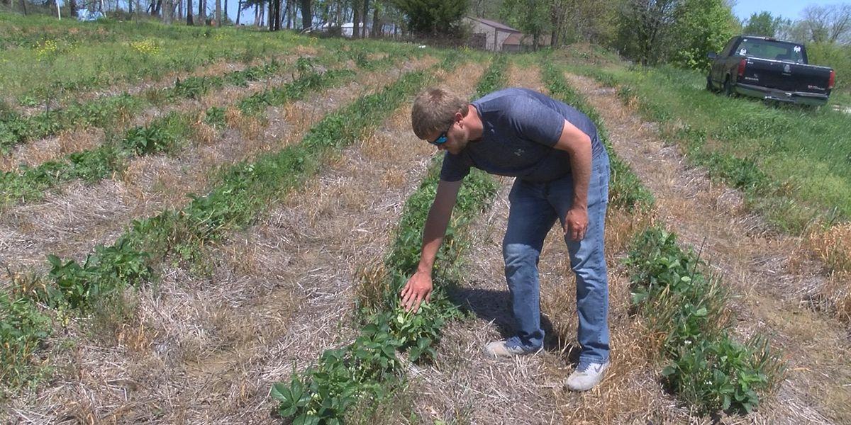 A Heartland farmer feels the financial impacts of COVID-19