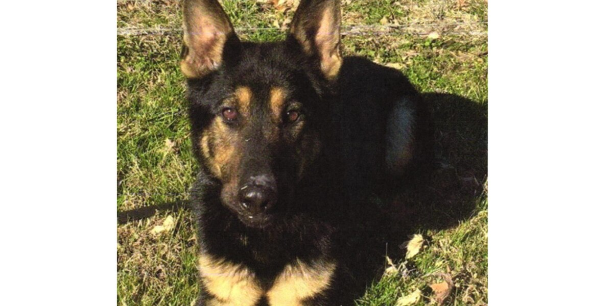 Dexter PD mourns the loss of K-9 officer Bard